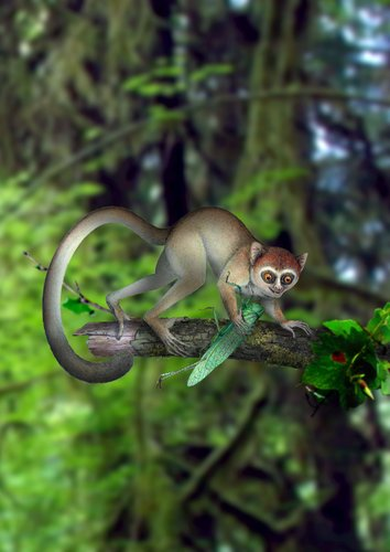 Xijun Ni/Chinese Academy of Sciences An artist's interpretation of a tiny primate that is thought to be the earliest known ancestor of nocturnal primates living today in Southeast Asia. from NYTimes 06/06/2013